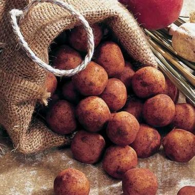 Edel-Marzipan-Kartoffeln im Kartoffel-Sack