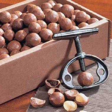Macadamia in der Schale & Nussknacker