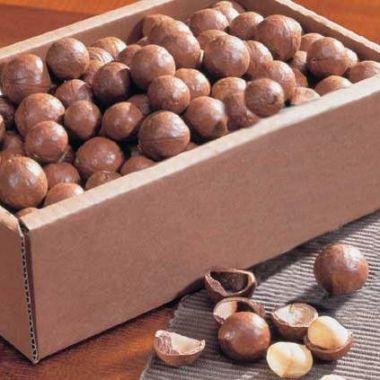 Macadamia-Nüsse Nachfüllbox